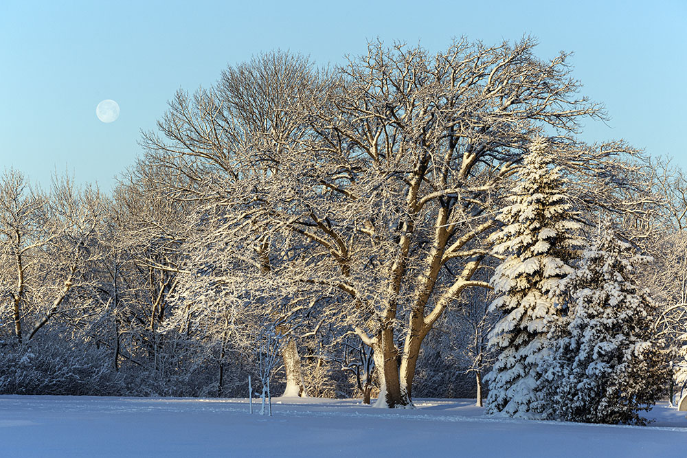 The full moon setting over snow-covered Estabrook Park
