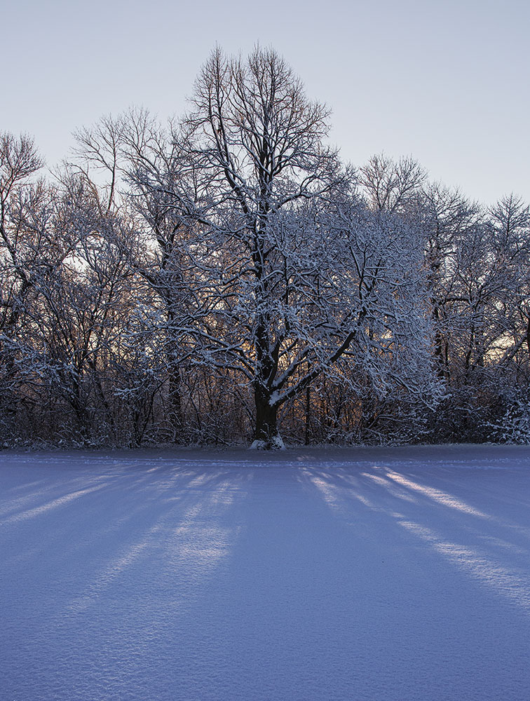 Sunrise through snowy trees at Estabrook Park