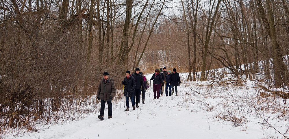 A line of hikers on a woodland trail
