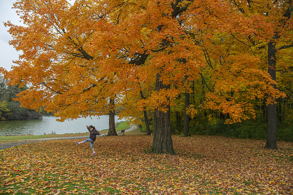 A girl kicking fallen leaves under a bright orange maple tree in Jackson Park