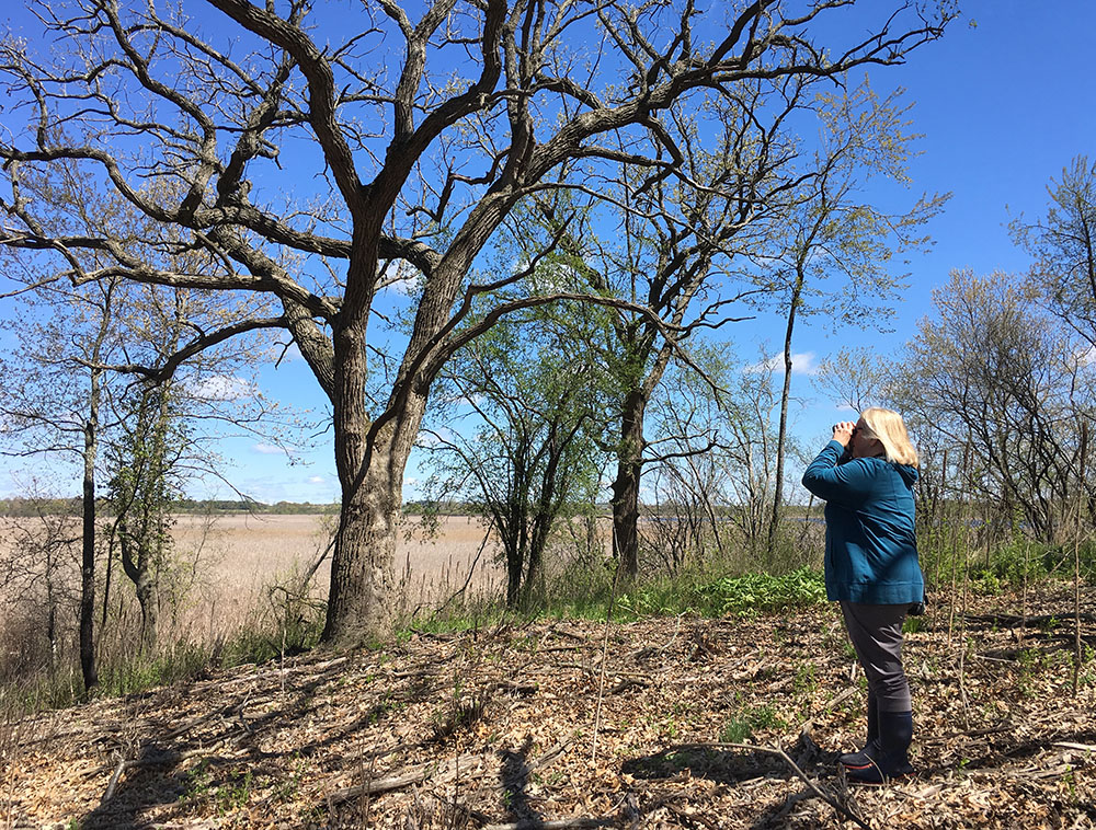 A birder with binoculars at Tichigan Wildlife Area