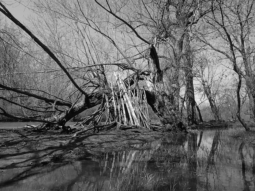 A stick fort along the Root River, Caledonia