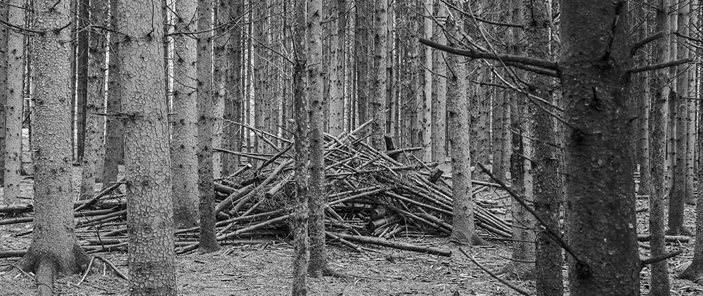 A stick fort in the pine forest of Glacial Hills County Park