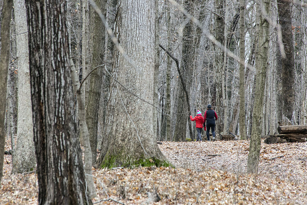 Mother and daughter hiking into a woodland at Greenfield Park