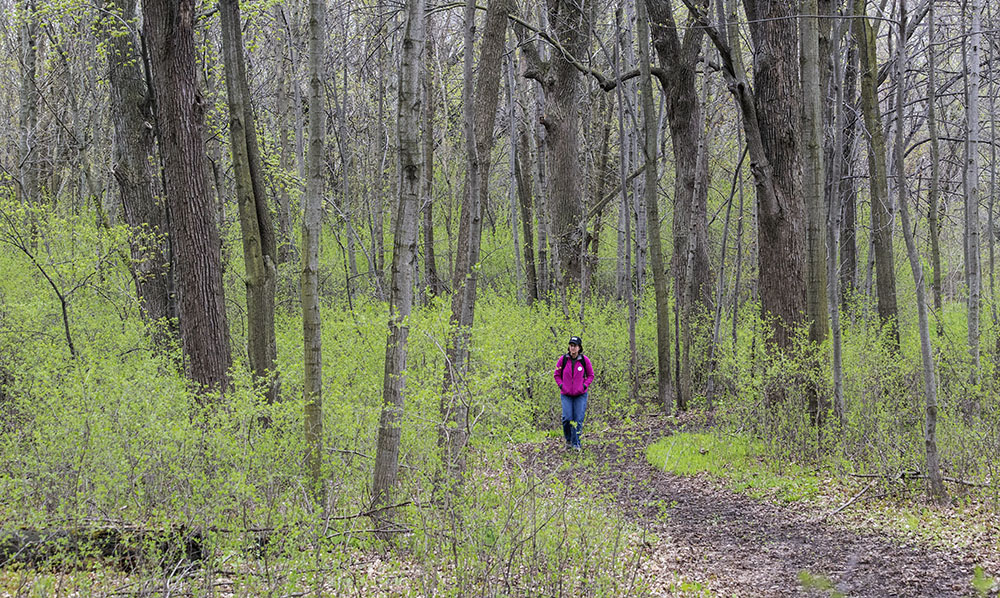 A woman walking a woodland trail in Havenwoods State Forest