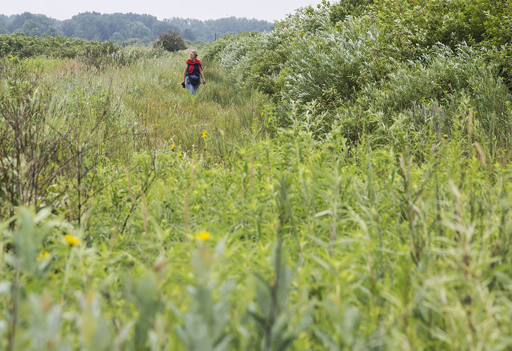 A woman walking through tall grass in Chiwaukee Prairie