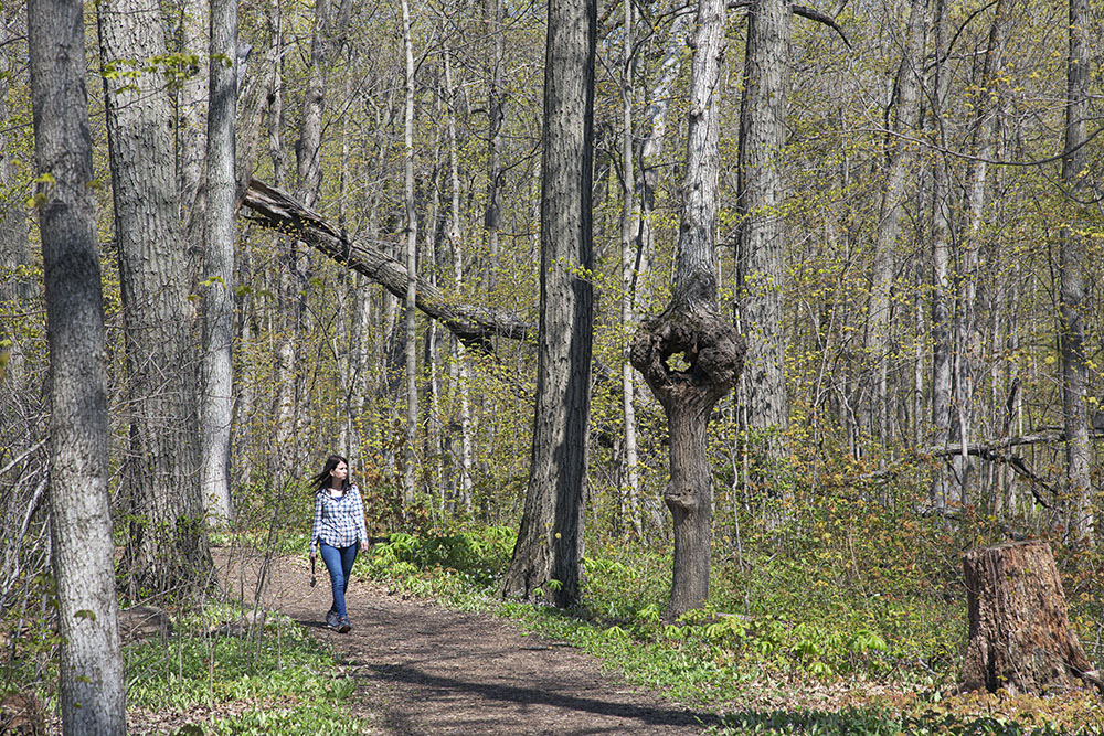 A young woman walking on a woodland trail in Petrifying Springs Park