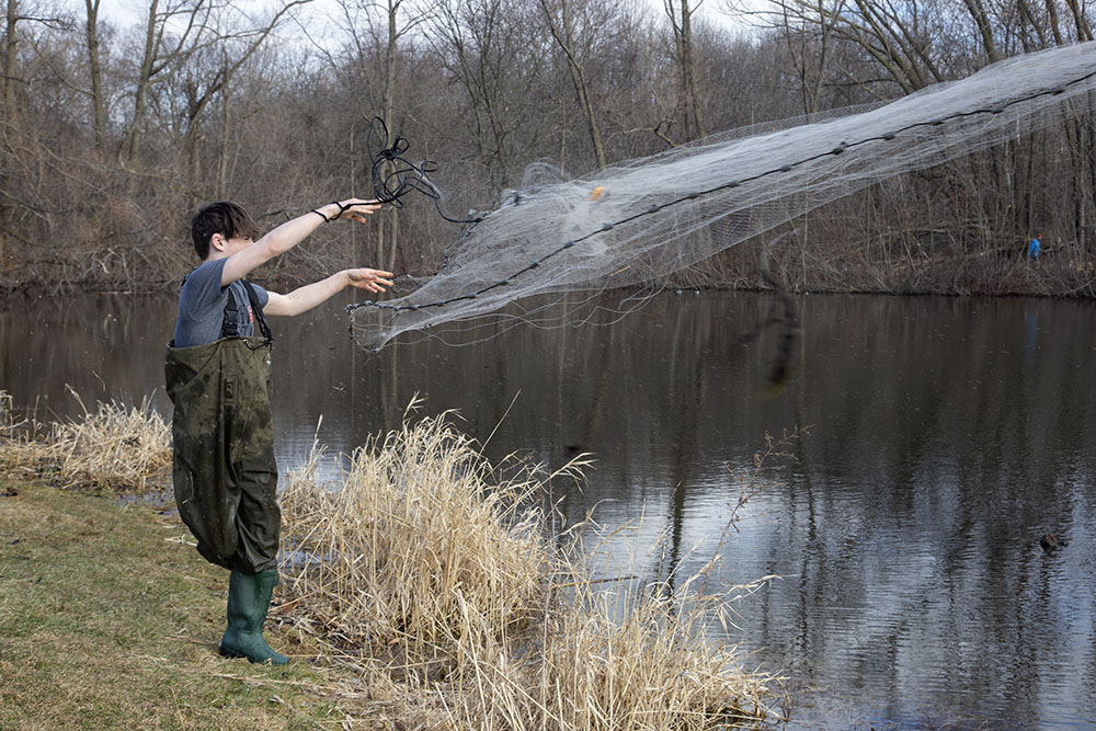 Fishing with a net for minnows to use as bait at Homestead Hollow County Park in Germantown.