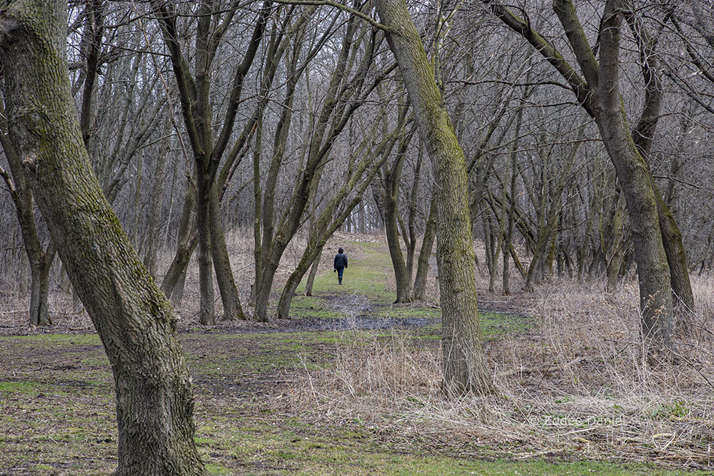 A lone hiker at Highland Woods Nature Preserve, Mequon.