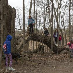 kids playing on log