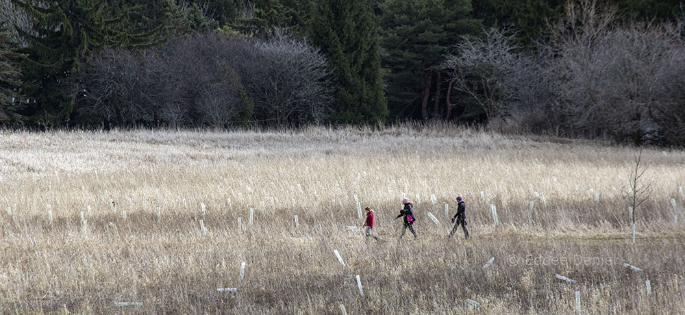 Three hikers in on a prairie trail in Mequon Nature Preserve