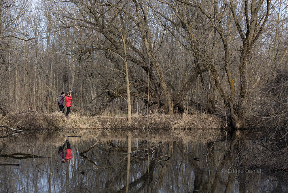 A couple of birders spot something at Trout Ponds Prairie Preserve, Caledonia.
