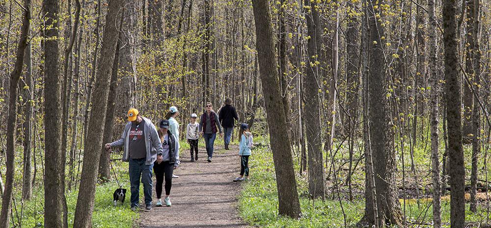 crowded woodland trail