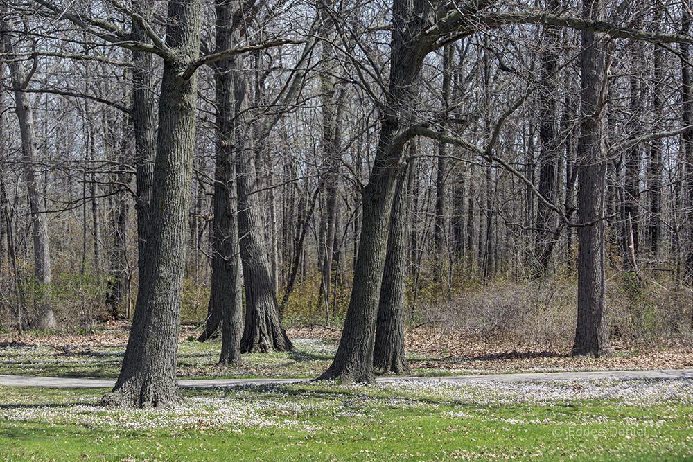 Edge of the woodland, McGovern Park, Milwaukee