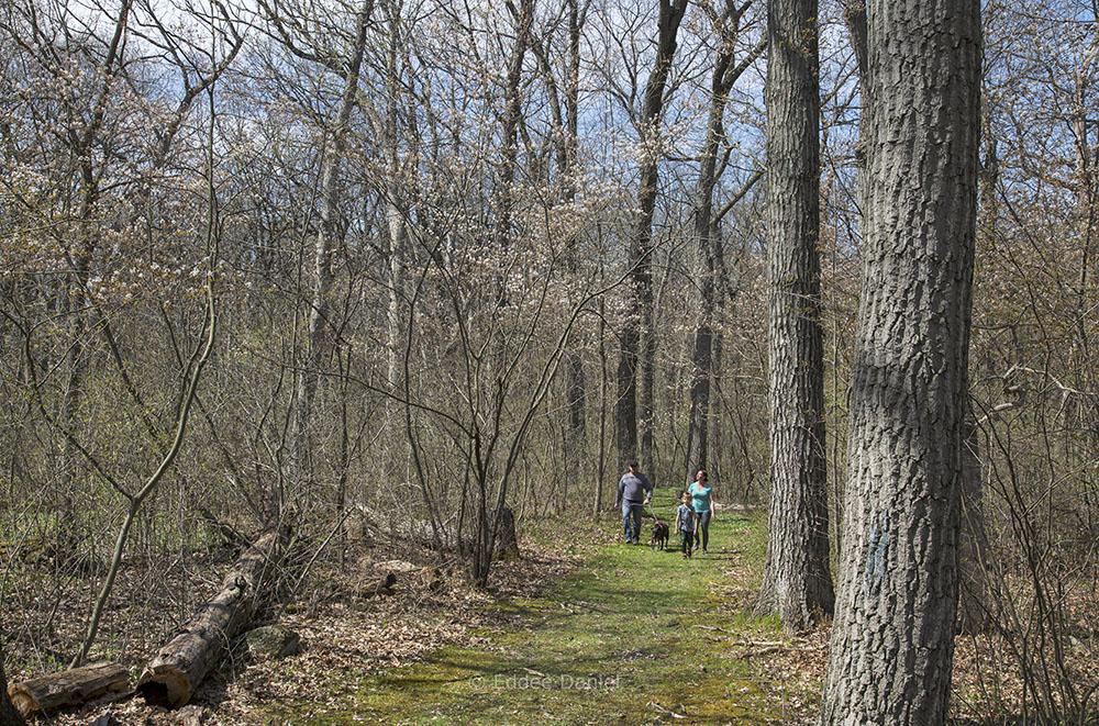 Spring blossoms in the woodland, Pringle Nature Center, Bristol County Park, Kenosha County