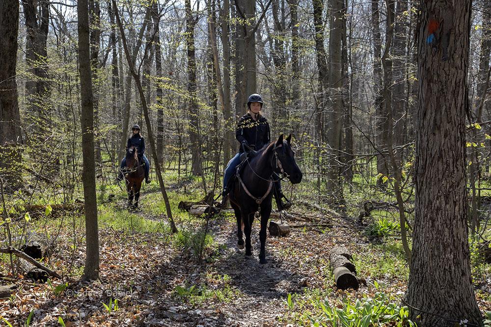 Woodland bridle trail