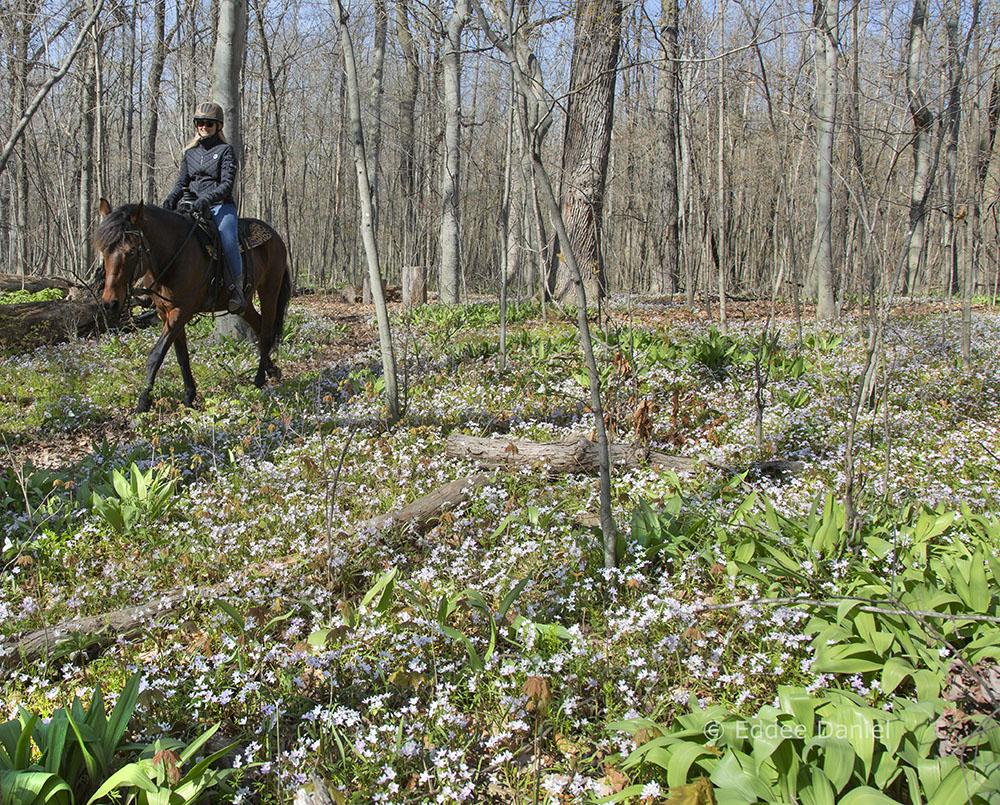 Riding through woodland wildflowers