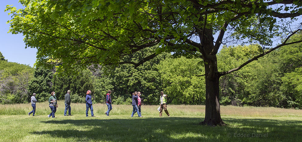 Tour group in Sanctuary Woods