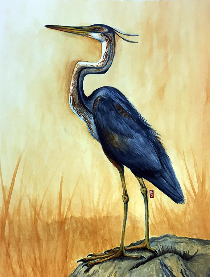 """Great Blue Heron,"" watercolor, 18""x20"""