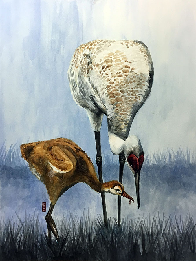 """Sandhill Crane and Colt,"" watercolor and gouache, 18""x20"""