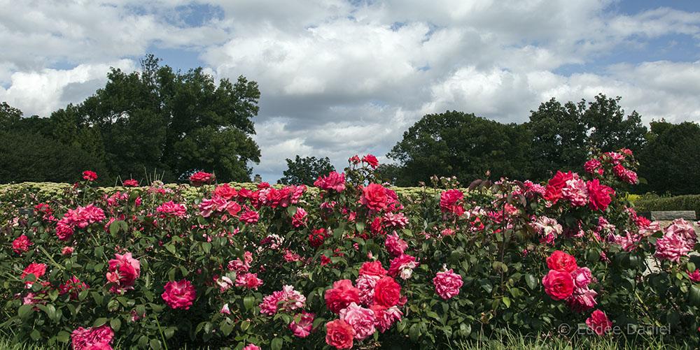 Boerner Botanical Gardens, Hales Corners.