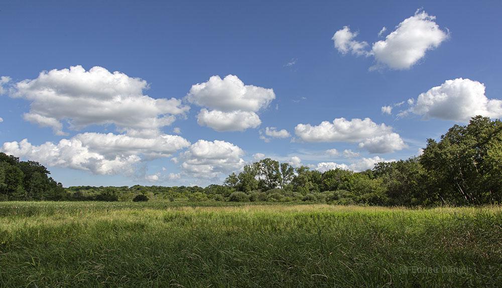 Wetland panorama.