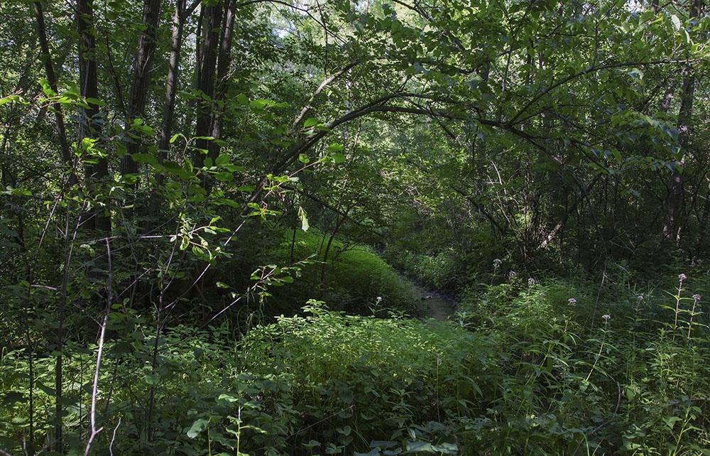 Woodland rill