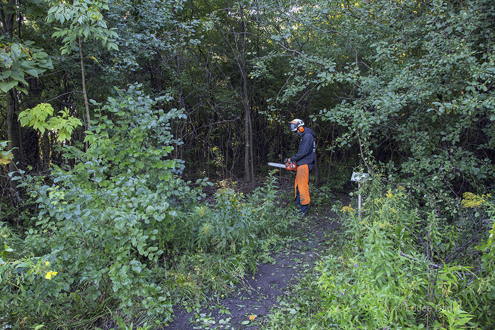 Entrance to Sanctuary Woods before clearing the buckthorn.
