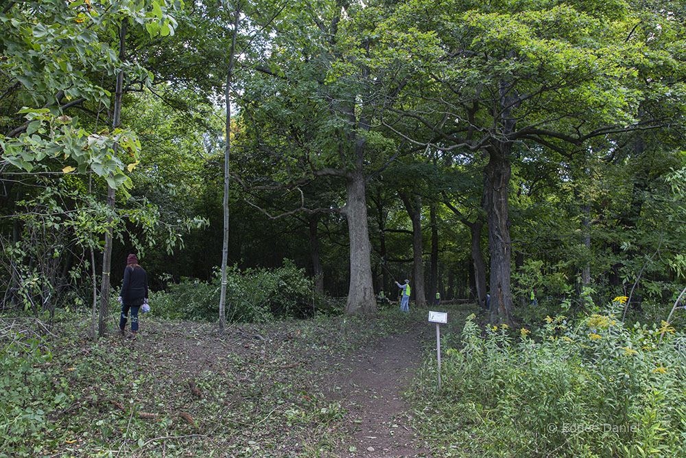 Entrance to Sanctuary Woods near the end of the event.