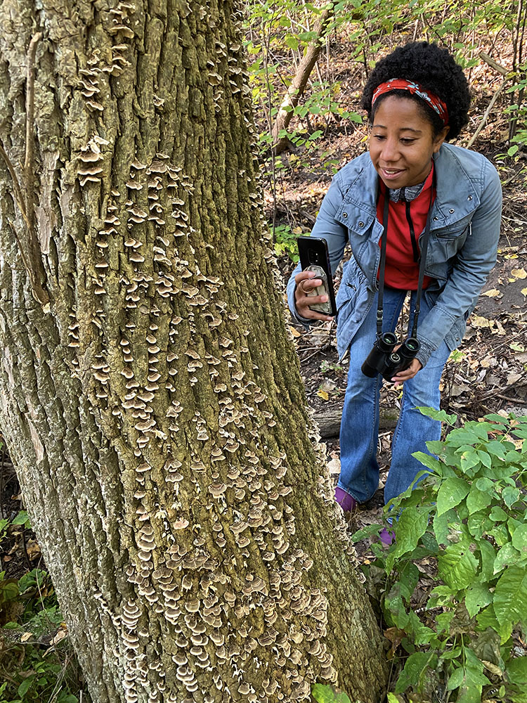 The author inspecting shelf fungi on a tree trunk.