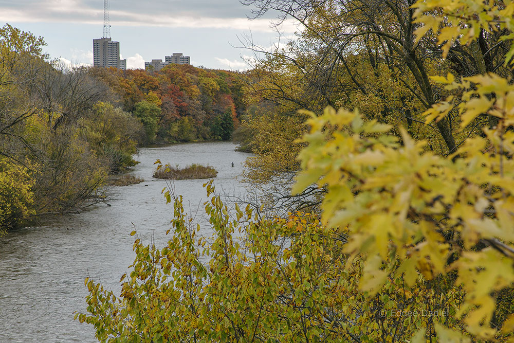 The Milwaukee River Greenway in red and gold. View south from Capitol Drive.