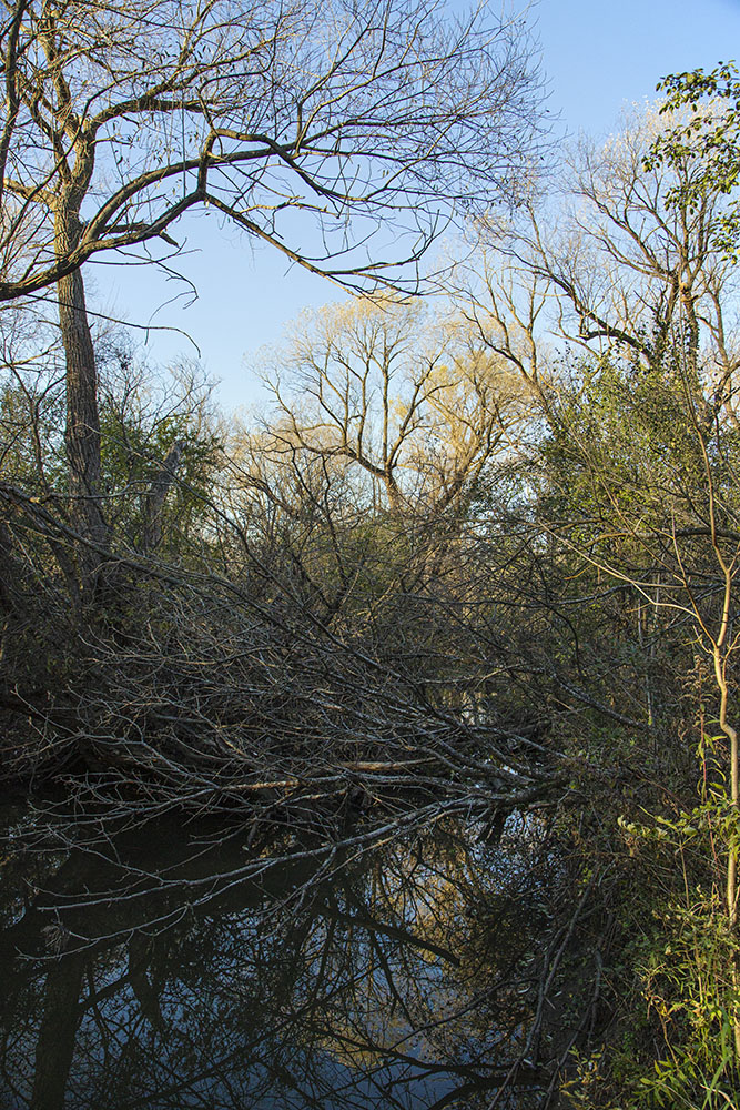 Root River clogged with trees