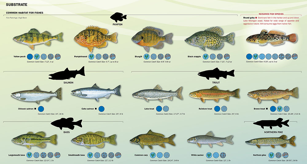 The maps include information about native and non-native fish and other aquatic species that can be found in the harbor and Milwaukee's three rivers.