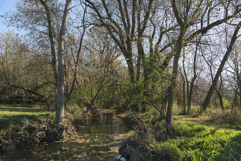 Wildcat Creek disappears into the wilderness beyond the mown lawns