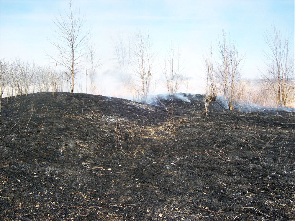 The mounds after a previous burn