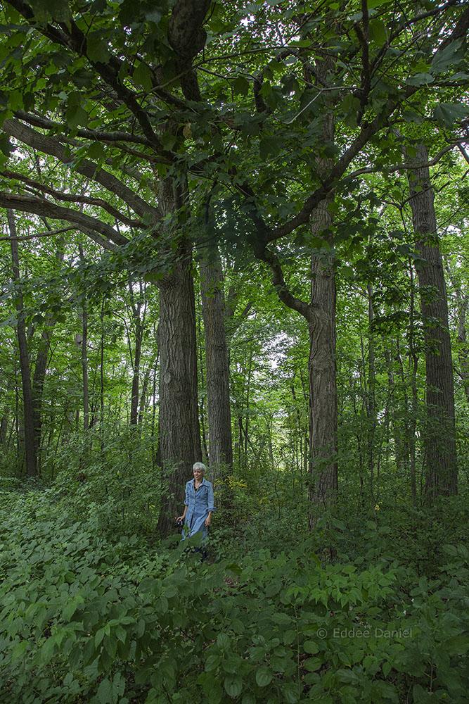 Sydney Woodland Preserve