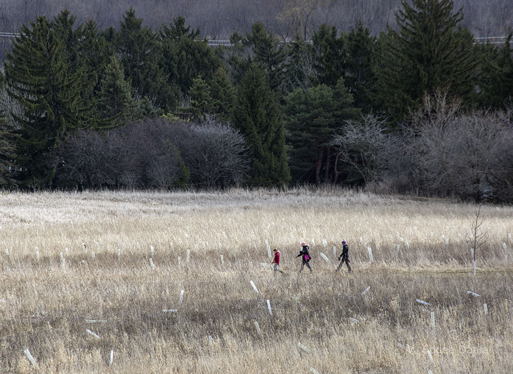 A socially distanced trio of hikers at Mequon Nature Preserve