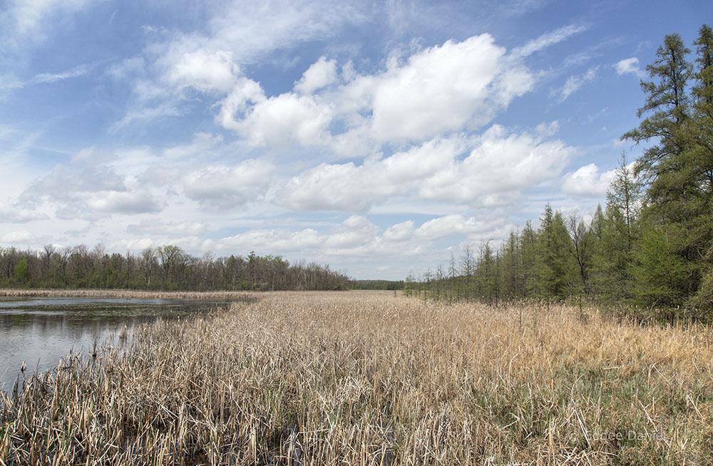Beck Lake and tamaracks at Zinn Preserve