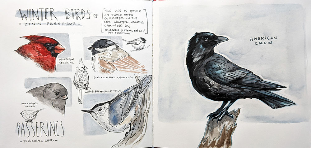 Winter birds of Zinn Preserve, watercolor and micron pen, by Emily Verbeten