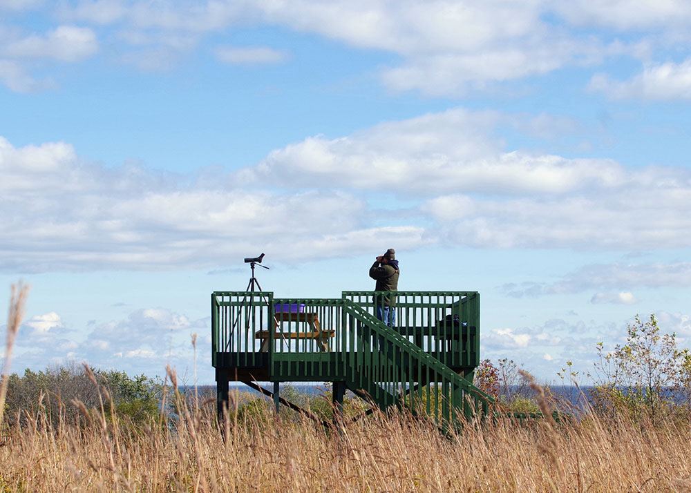 The hawk tower at Forest Beach Migratory Preserve