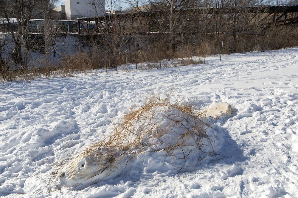 snow beaver