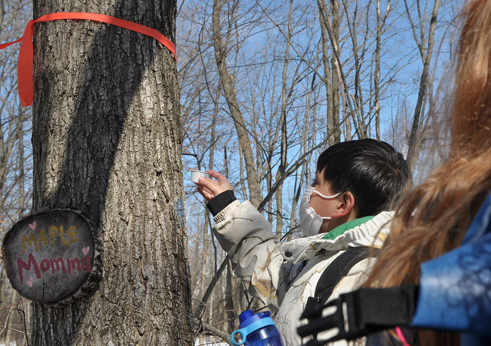 Tasting Sugar Maple sap at Riveredge Nature Center.