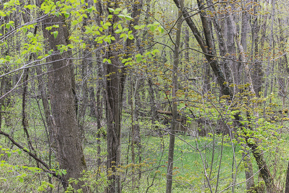 Renak-Polak Maple-Beech Woods State Natural Area, Racine County